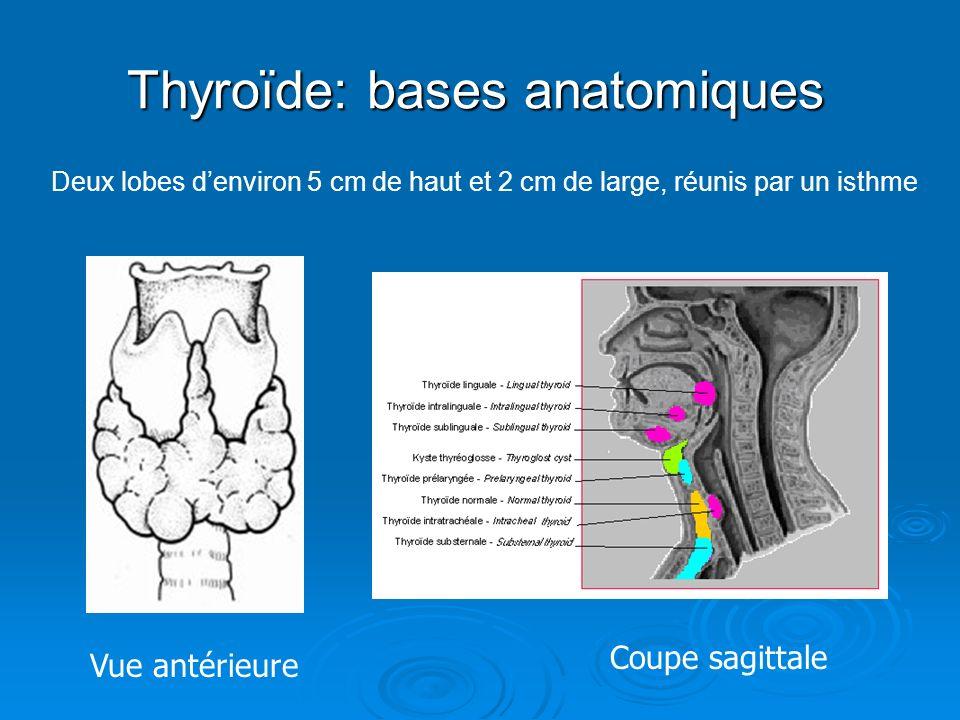 Thyroïde: bases anatomiques Vue antérieure Coupe sagittale Deux lobes denviron 5 cm de haut et 2 cm de large, réunis par un isthme