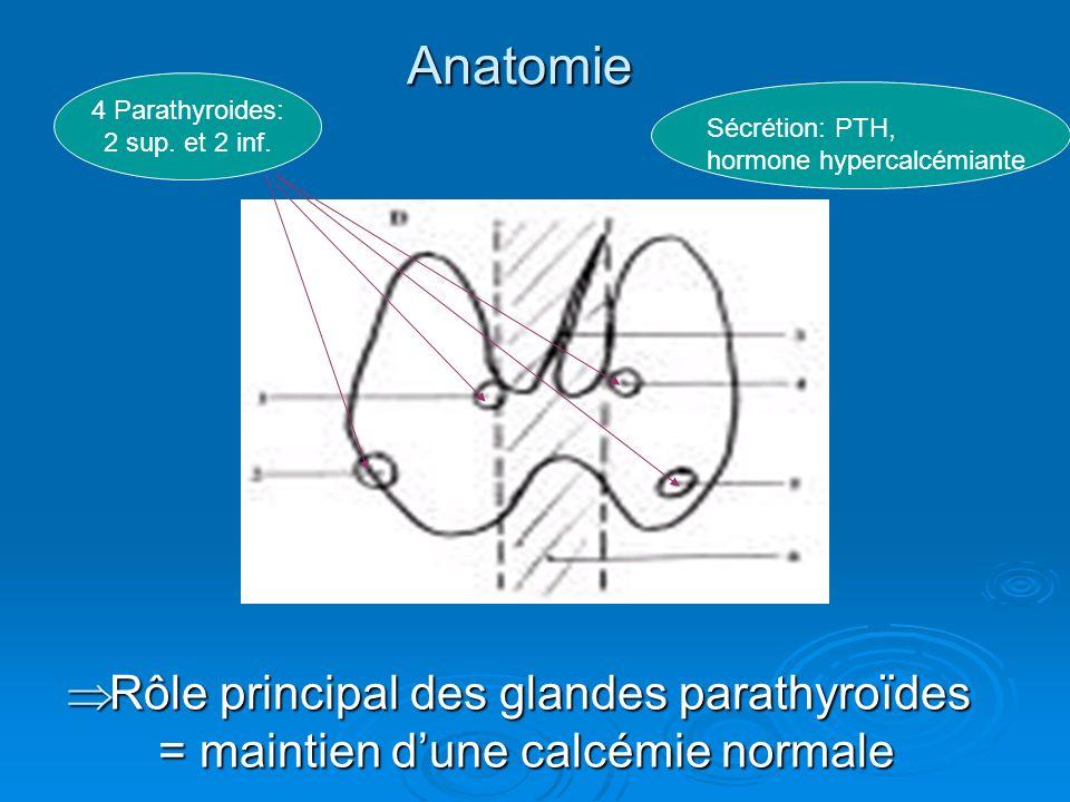 Anatomie 4 Parathyroides: 2 sup. et 2 inf. Sécrétion: PTH, hormone hypercalcémiante Rôle principal des glandes parathyroïdes = maintien dune calcémie