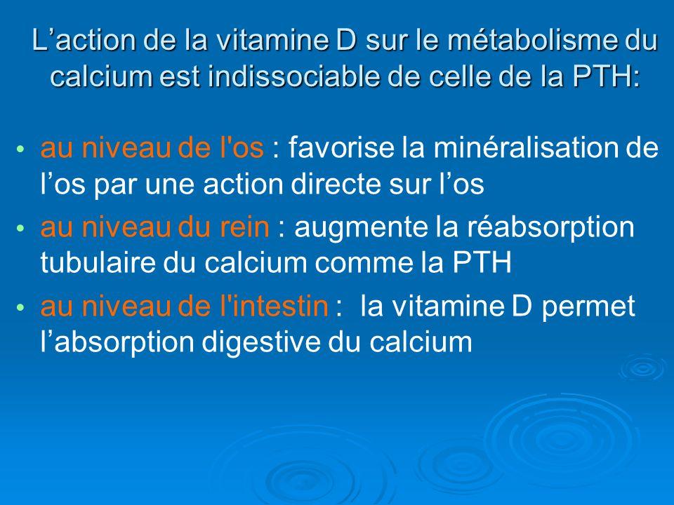 Laction de la vitamine D sur le métabolisme du calcium est indissociable de celle de la PTH: au niveau de l os : favorise la minéralisation de los par une action directe sur los au niveau du rein : augmente la réabsorption tubulaire du calcium comme la PTH au niveau de l intestin : la vitamine D permet labsorption digestive du calcium