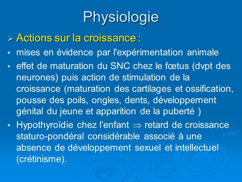 A part : la thyrocalcitonine Hormone synthétisée également par la thyroïde mais par les cellules C.
