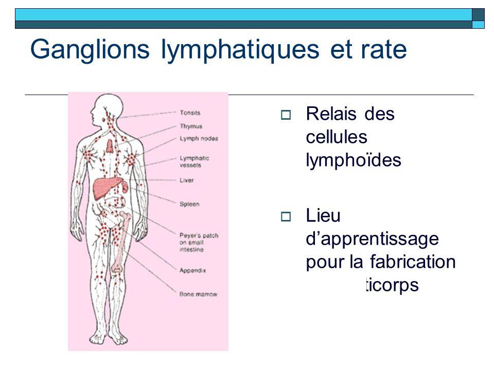 Ganglions lymphatiques et rate Relais des cellules lymphoïdes Lieu dapprentissage pour la fabrication des anticorps