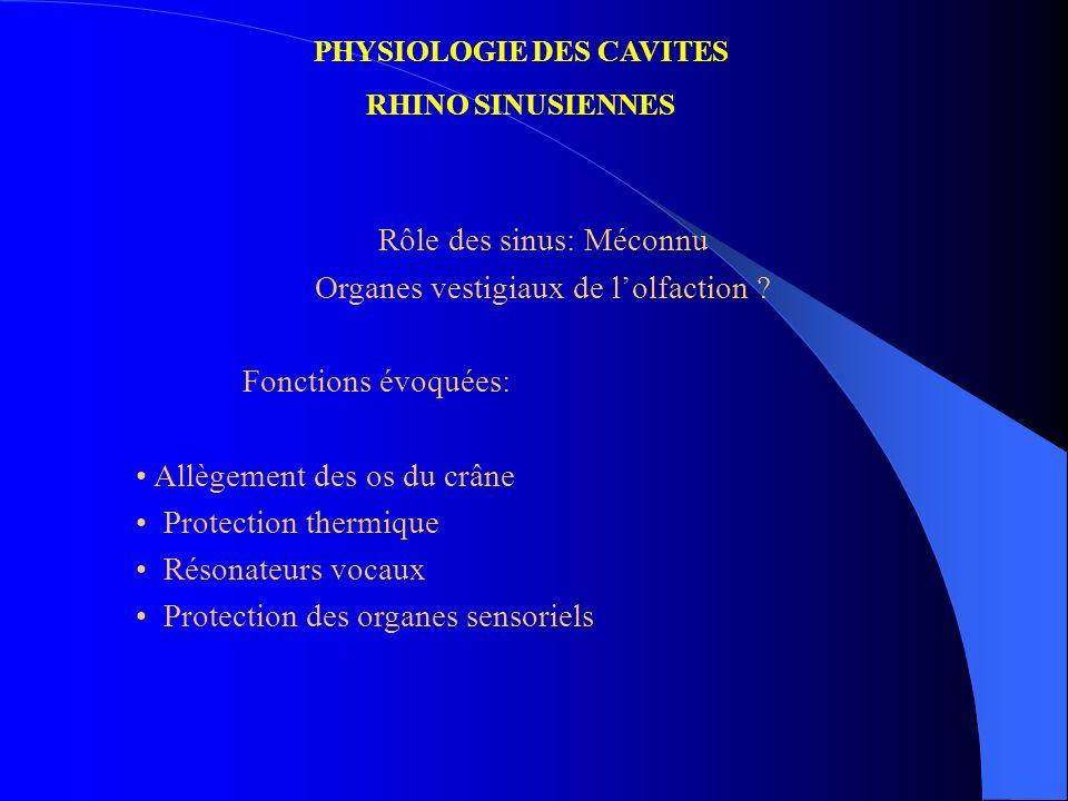 PHYSIOLOGIE DES CAVITES RHINO SINUSIENNES Rôle des sinus: Méconnu Organes vestigiaux de lolfaction ? Fonctions évoquées: Allègement des os du crâne Pr