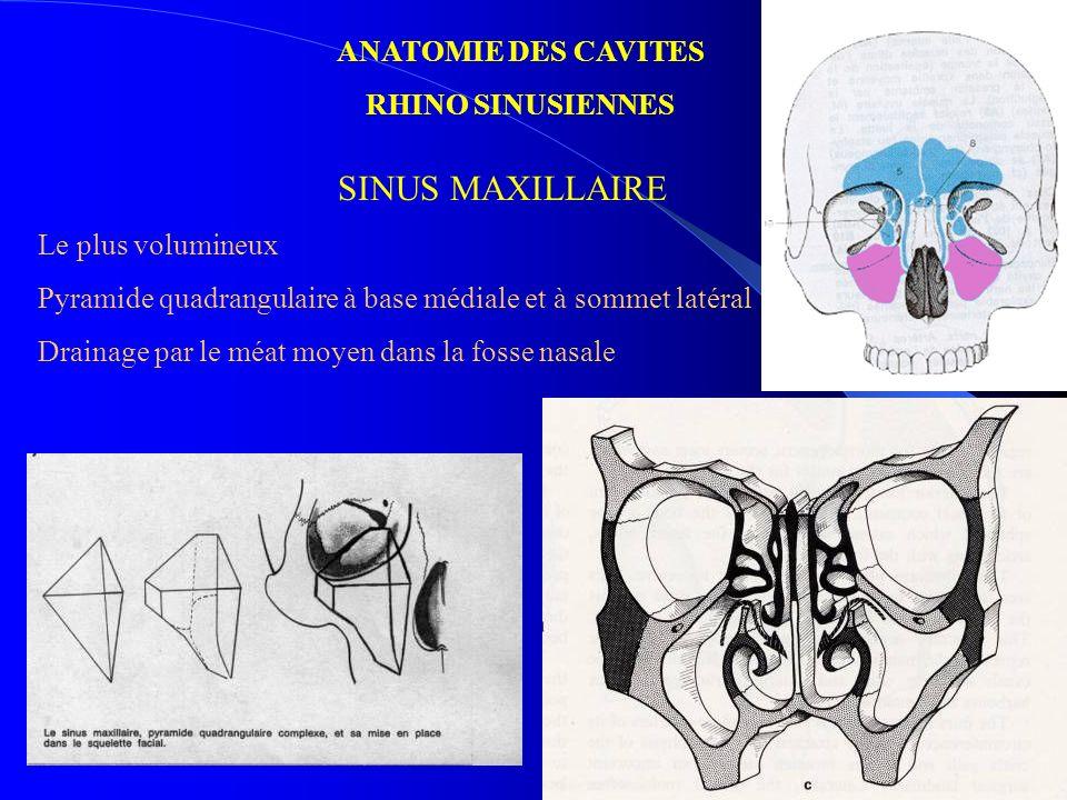ANATOMIE DES CAVITES RHINO SINUSIENNES SINUS FRONTAL Le plus antérieur Pneumatisation de lépaisseur de los frontal Variations anatomiques Drainage par le canal naso-frontal