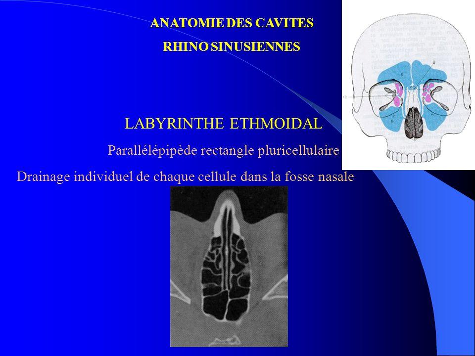 ANATOMIE DES CAVITES RHINO SINUSIENNES LABYRINTHE ETHMOIDAL Parallélépipède rectangle pluricellulaire Drainage individuel de chaque cellule dans la fo