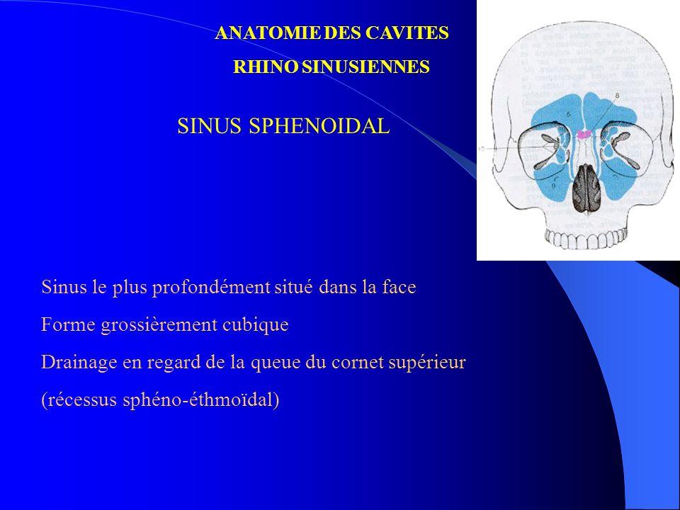 ANATOMIE DES CAVITES RHINO SINUSIENNES SINUS SPHENOIDAL Sinus le plus profondément situé dans la face Forme grossièrement cubique Drainage en regard d