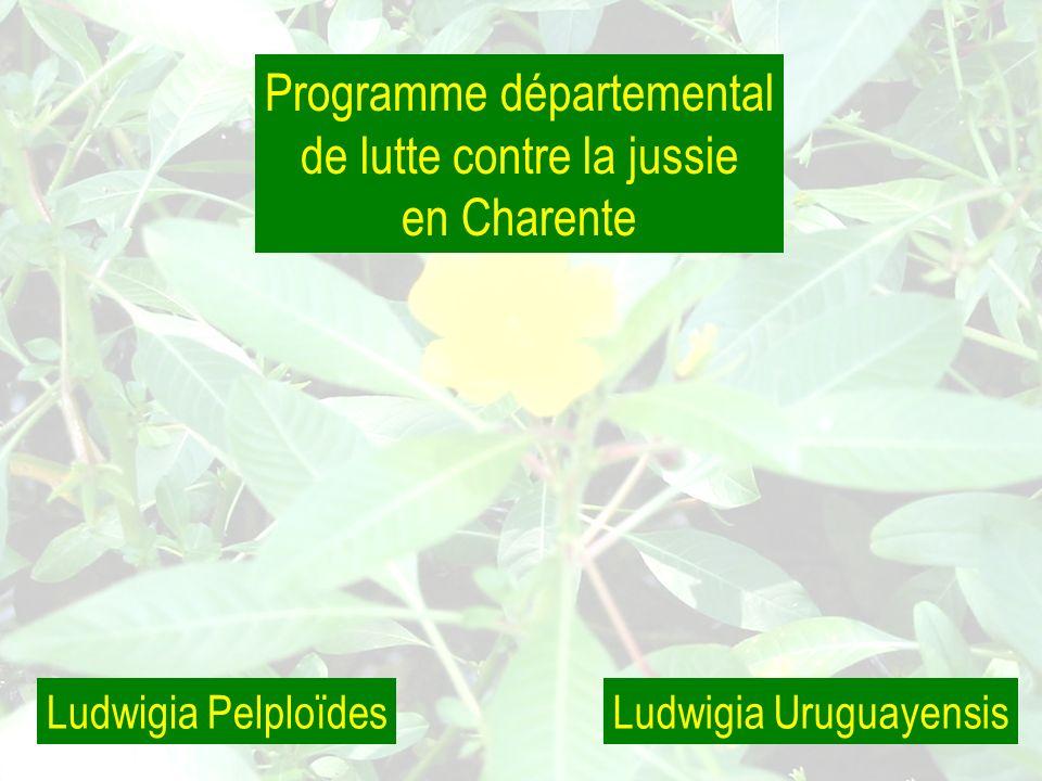 Ludwigia PelploïdesLudwigia Uruguayensis Programme départemental de lutte contre la jussie en Charente