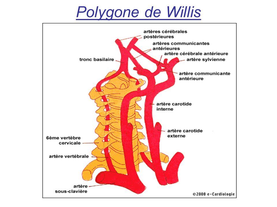 Polygone de Willis
