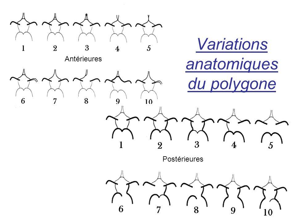 Variations anatomiques du polygone Antérieures Postérieures