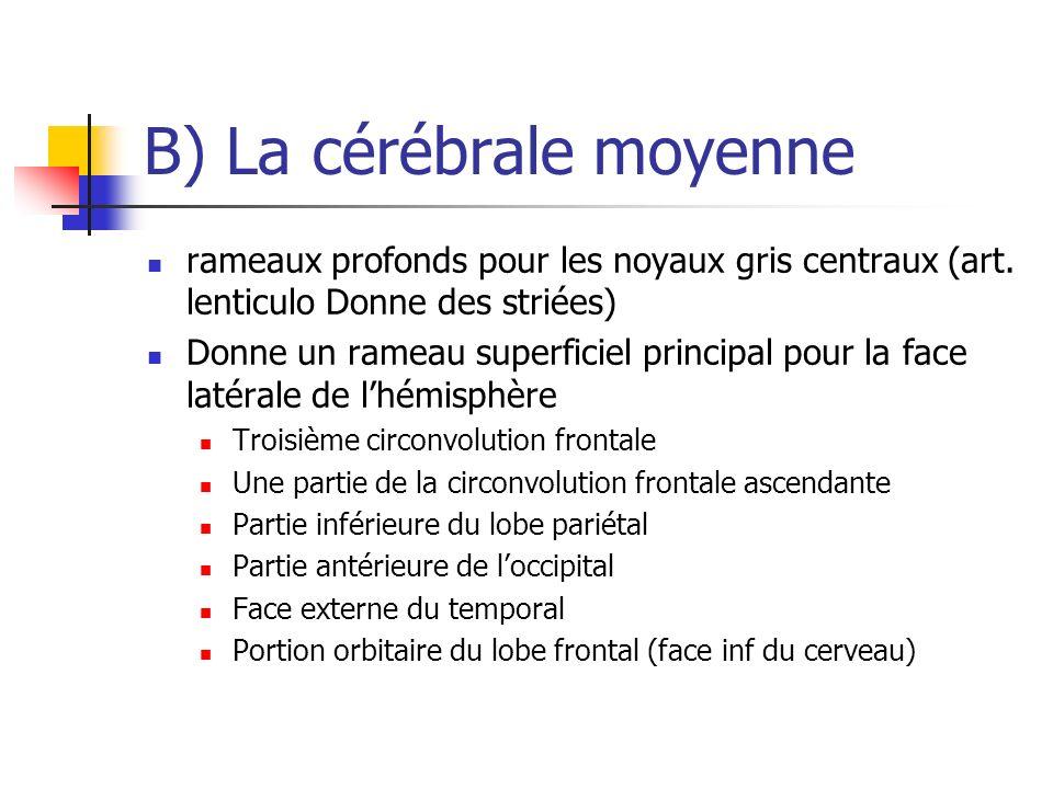 B) La cérébrale moyenne rameaux profonds pour les noyaux gris centraux (art.