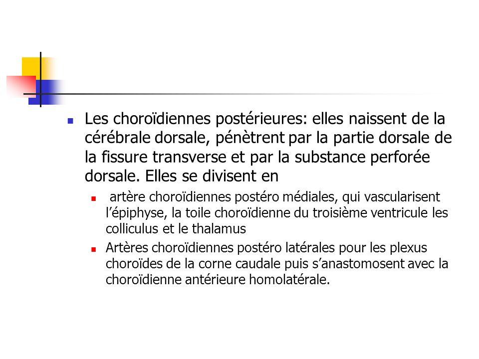 Les choroïdiennes postérieures: elles naissent de la cérébrale dorsale, pénètrent par la partie dorsale de la fissure transverse et par la substance perforée dorsale.