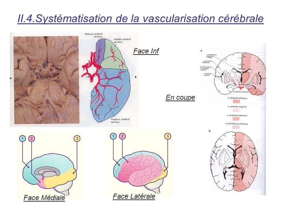 II.4.Systématisation de la vascularisation cérébrale Face Inf Face Médiale Face Latérale En coupe