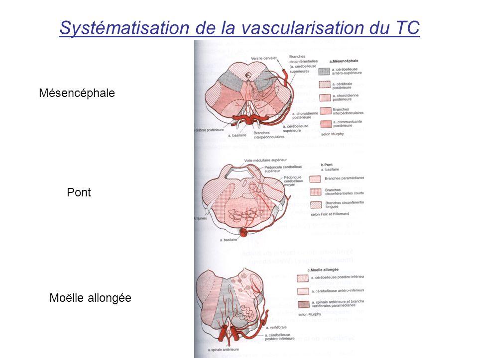 Systématisation de la vascularisation du TC Mésencéphale Pont Moëlle allongée