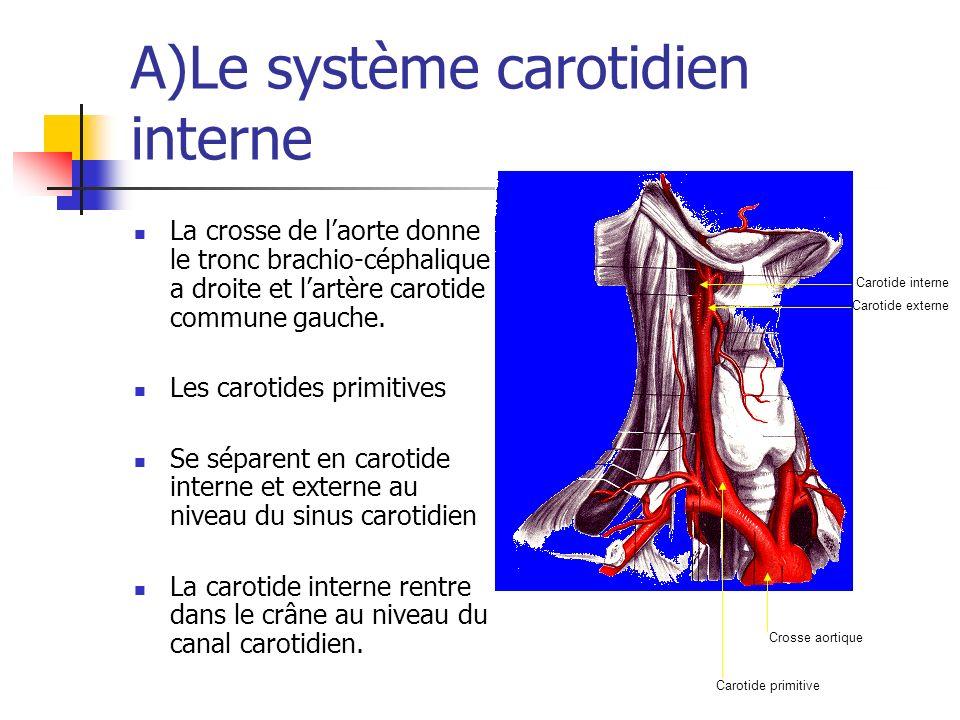 A)Le système carotidien interne La crosse de laorte donne le tronc brachio-céphalique a droite et lartère carotide commune gauche. Les carotides primi
