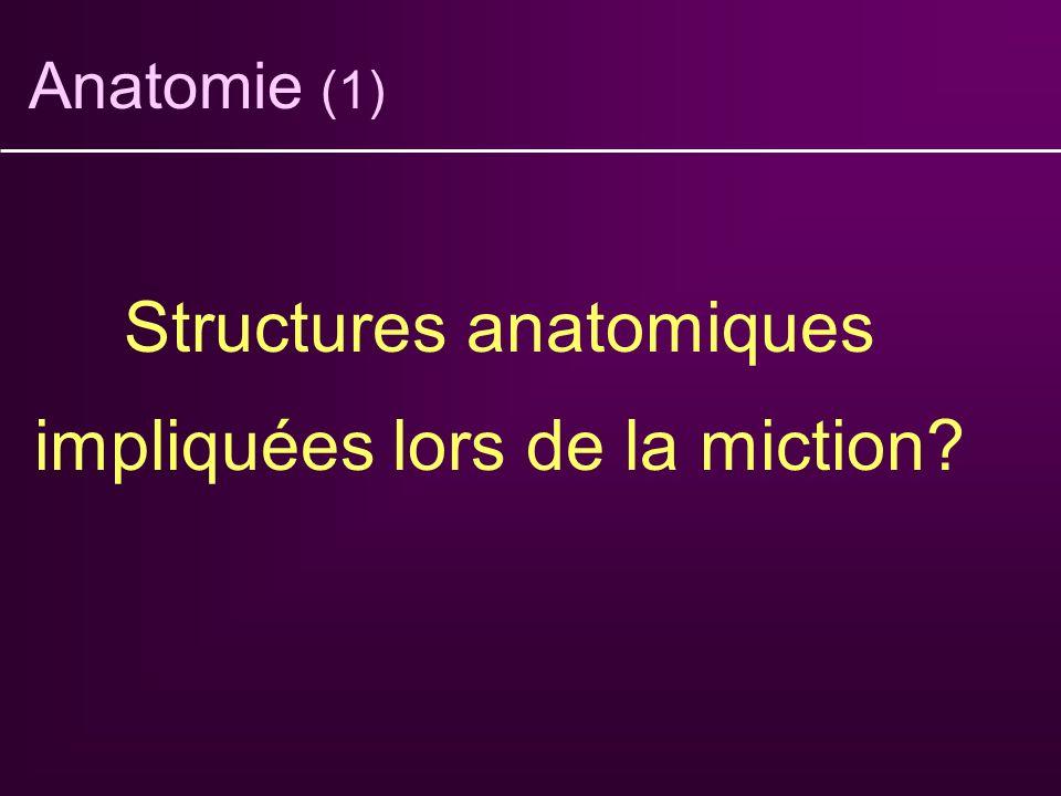 Anatomie (1) Structures anatomiques impliquées lors de la miction?