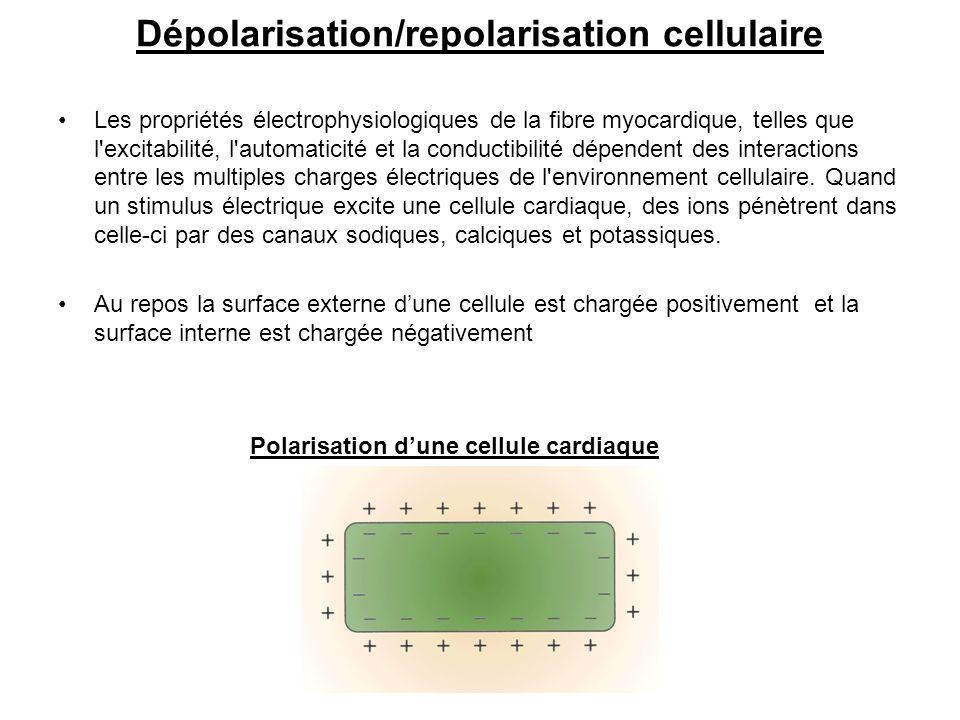 Dépolarisation/repolarisation cellulaire Les propriétés électrophysiologiques de la fibre myocardique, telles que l'excitabilité, l'automaticité et la