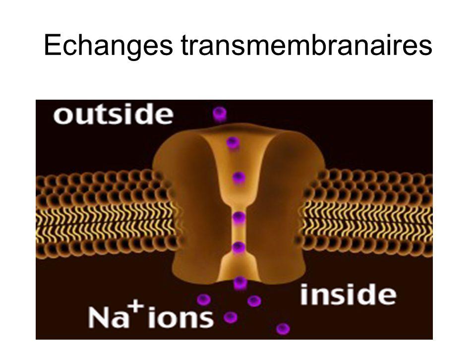 Echanges transmembranaires