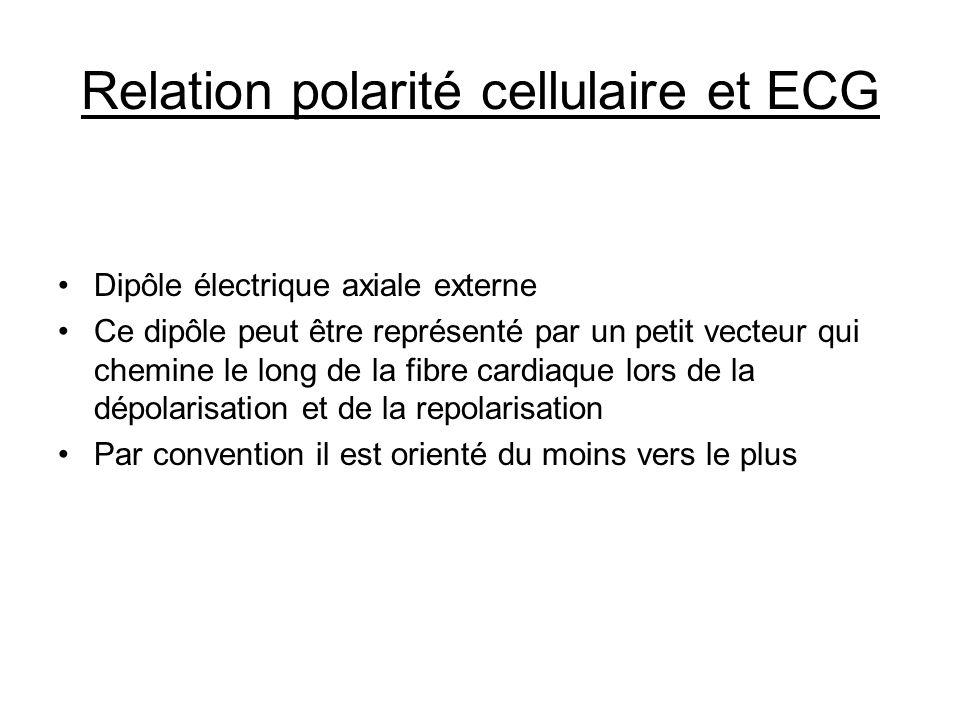 Relation polarité cellulaire et ECG Dipôle électrique axiale externe Ce dipôle peut être représenté par un petit vecteur qui chemine le long de la fib