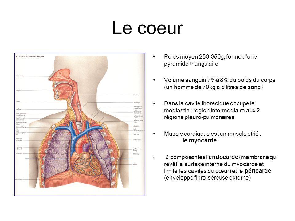 Le coeur Poids moyen 250-350g, forme dune pyramide triangulaire Volume sanguin 7%à 8% du poids du corps (un homme de 70kg a 5 litres de sang) Dans la