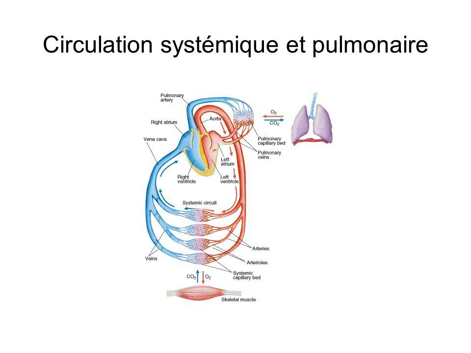 Circulation systémique et pulmonaire