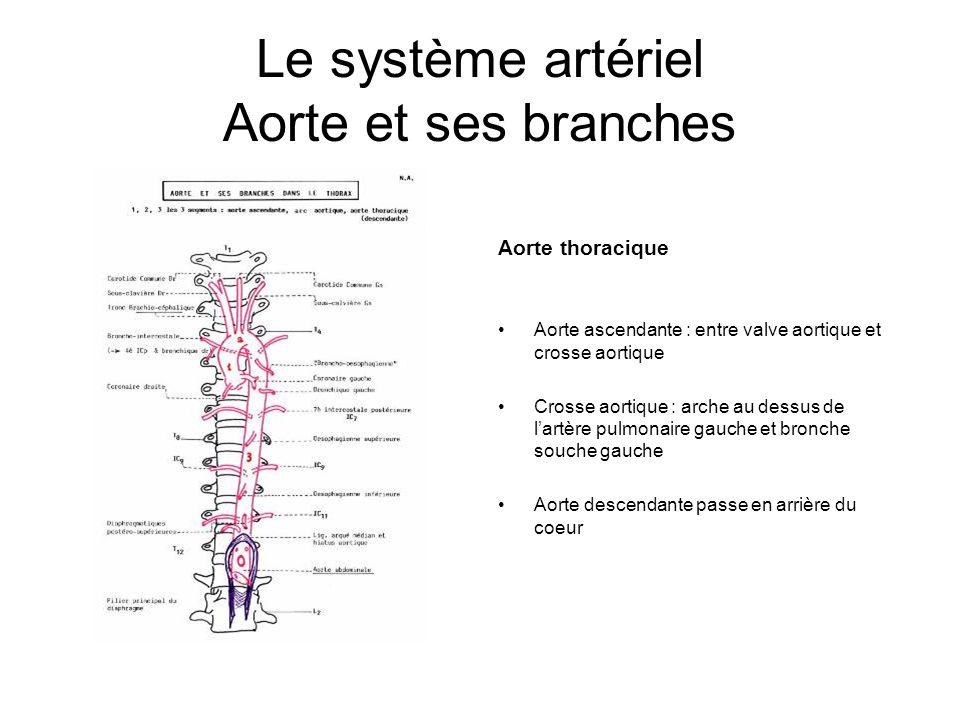 Le système artériel Aorte et ses branches Aorte thoracique Aorte ascendante : entre valve aortique et crosse aortique Crosse aortique : arche au dessu