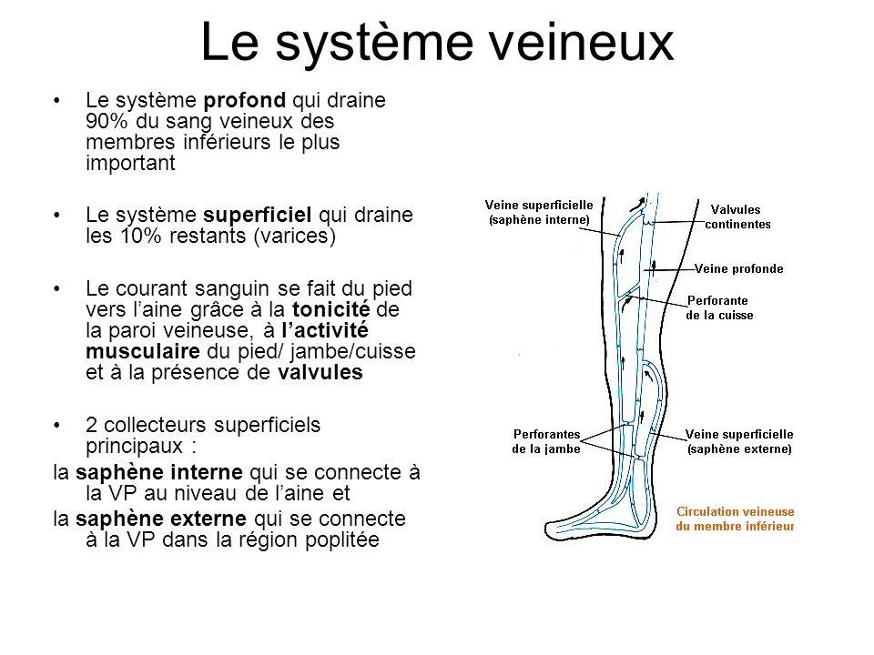 Le système veineux Le système profond qui draine 90% du sang veineux des membres inférieurs le plus important Le système superficiel qui draine les 10