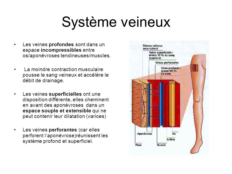 Les veines profondes sont dans un espace incompressibles entre os/aponévroses tendineuses/muscles. La moindre contraction musculaire pousse le sang ve