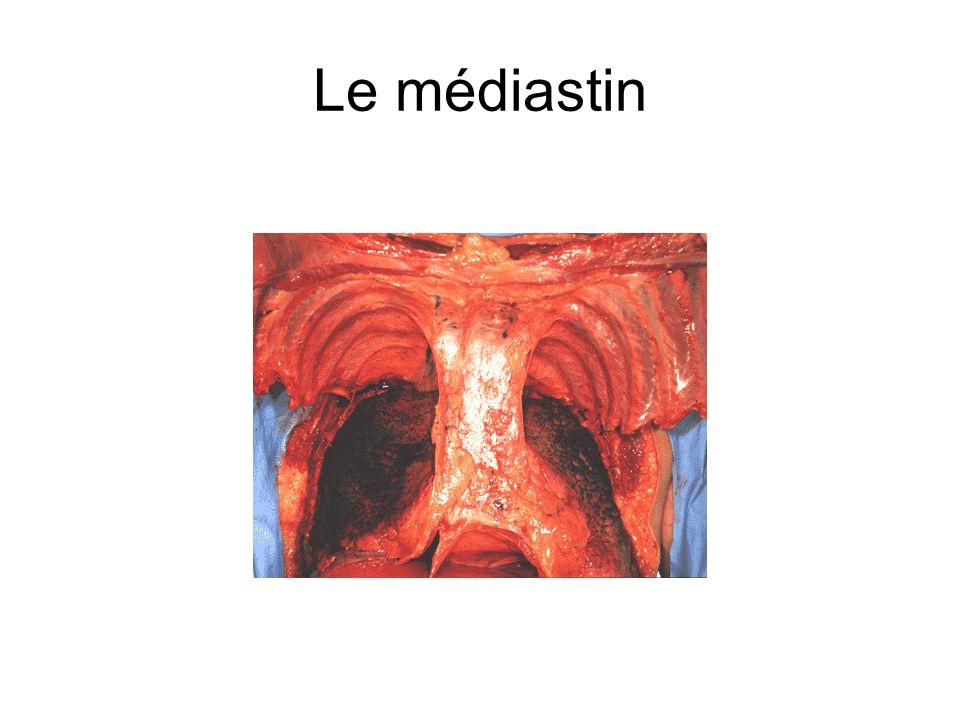Le médiastin