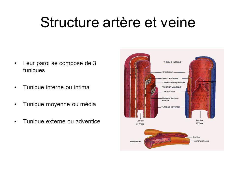 Structure artère et veine Leur paroi se compose de 3 tuniques Tunique interne ou intima Tunique moyenne ou média Tunique externe ou adventice