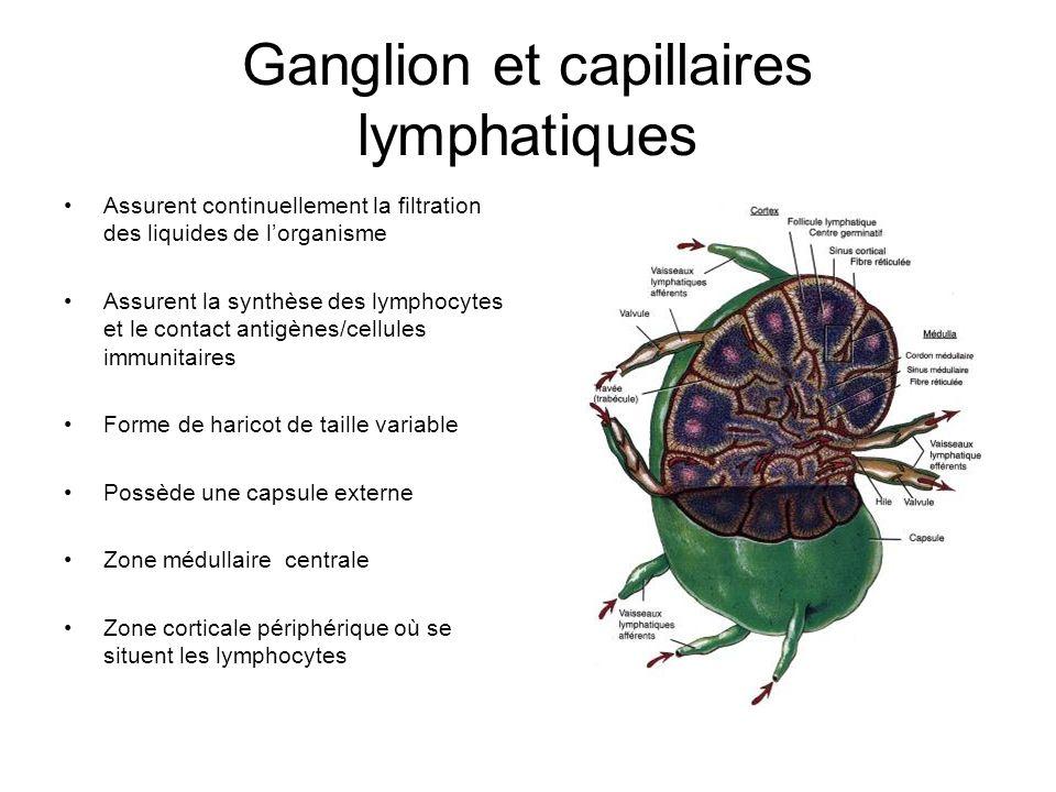 Ganglion et capillaires lymphatiques Assurent continuellement la filtration des liquides de lorganisme Assurent la synthèse des lymphocytes et le cont
