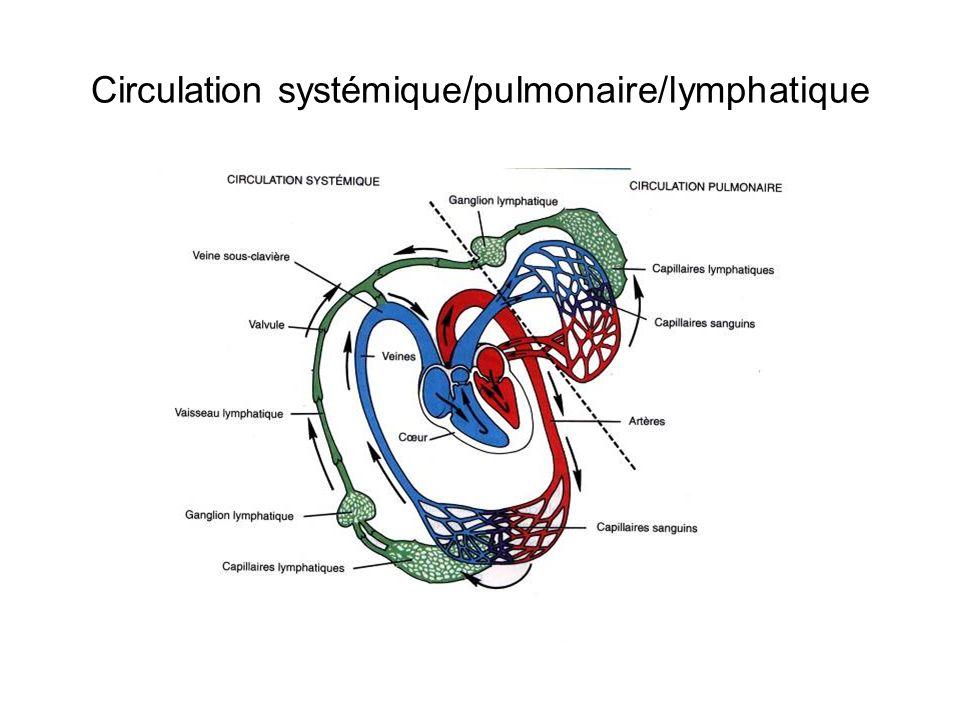 Circulation systémique/pulmonaire/lymphatique