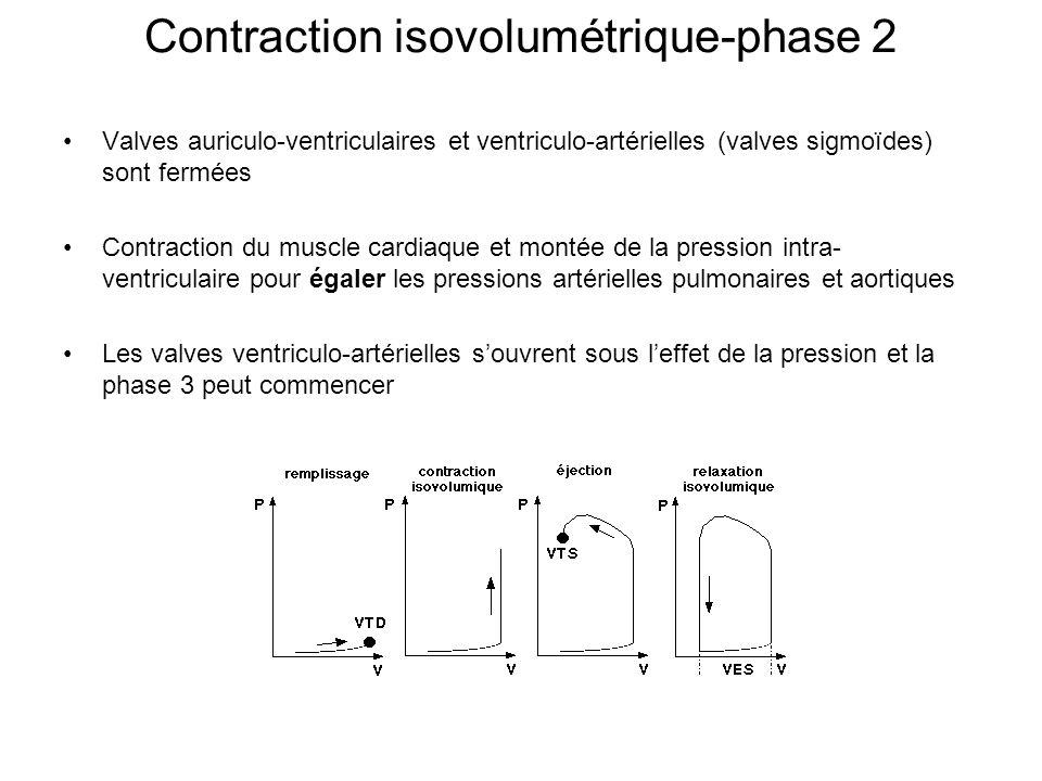 Contraction isovolumétrique-phase 2 Valves auriculo-ventriculaires et ventriculo-artérielles (valves sigmoïdes) sont fermées Contraction du muscle car
