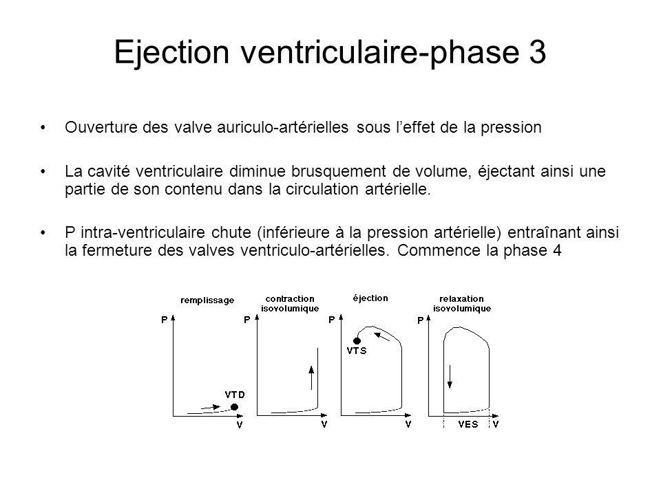 Ejection ventriculaire-phase 3 Ouverture des valve auriculo-artérielles sous leffet de la pression La cavité ventriculaire diminue brusquement de volu