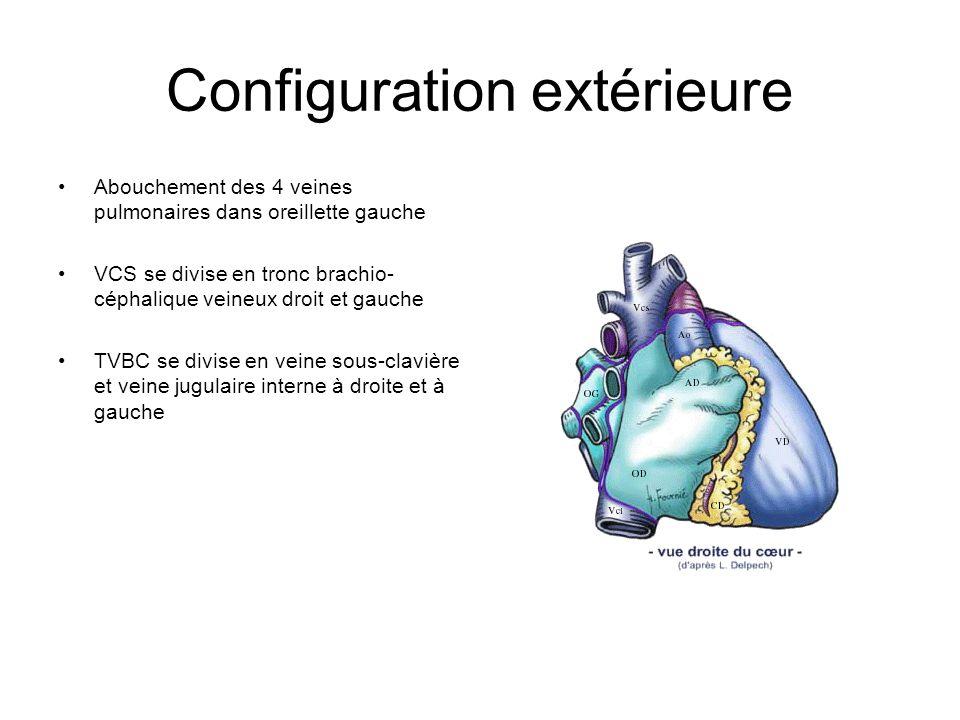 Configuration extérieure Abouchement des 4 veines pulmonaires dans oreillette gauche VCS se divise en tronc brachio- céphalique veineux droit et gauch