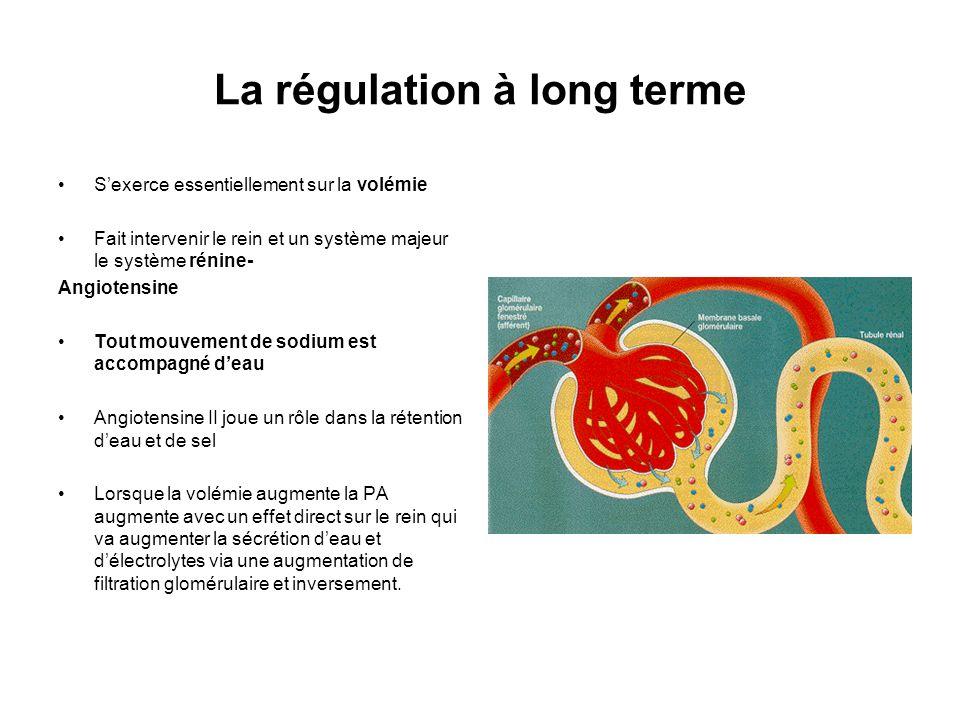 La régulation à long terme Sexerce essentiellement sur la volémie Fait intervenir le rein et un système majeur le système rénine- Angiotensine Tout mo