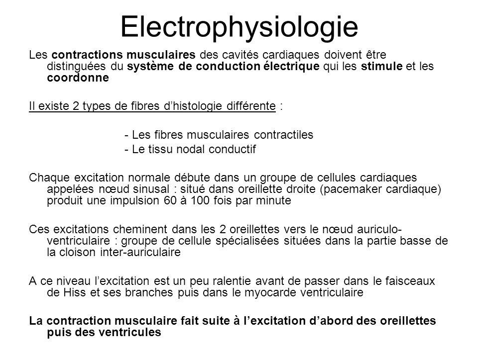 Electrophysiologie Les contractions musculaires des cavités cardiaques doivent être distinguées du système de conduction électrique qui les stimule et