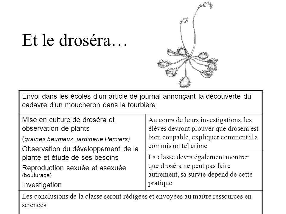 Et le droséra… Envoi dans les écoles dun article de journal annonçant la découverte du cadavre dun moucheron dans la tourbière. Mise en culture de dro