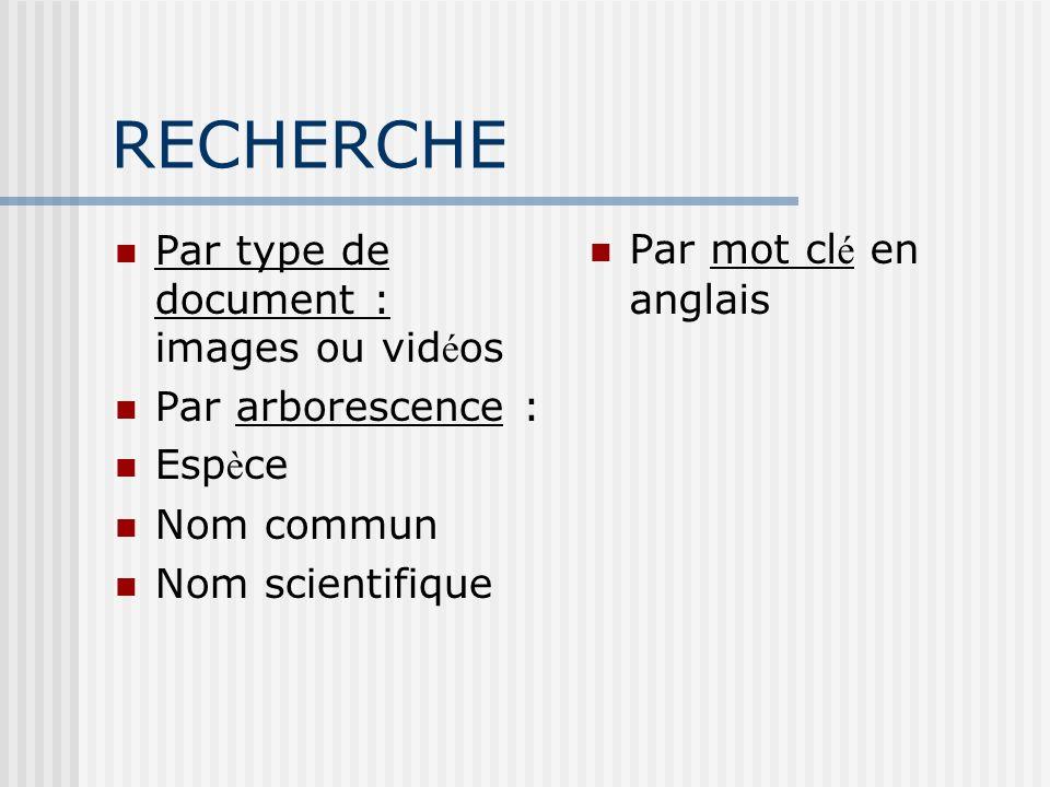 RECHERCHE Par type de document : images ou vid é os Par arborescence : Esp è ce Nom commun Nom scientifique Par mot cl é en anglais