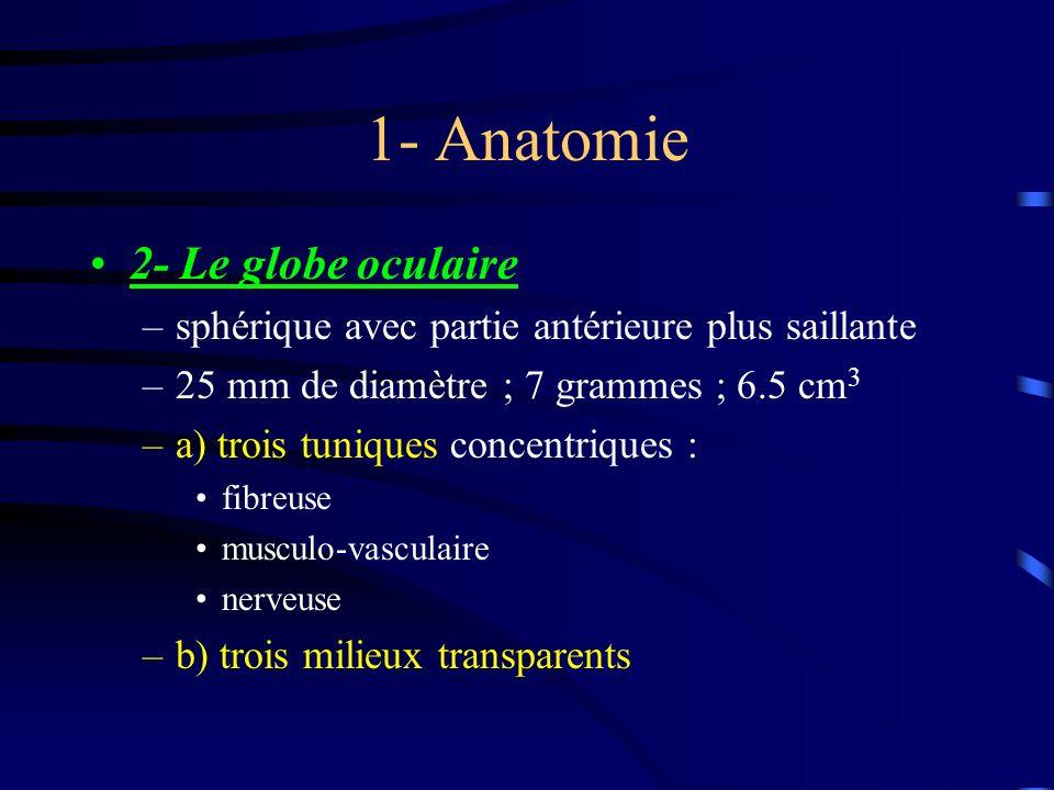 1- Anatomie 2- Le globe oculaire –sphérique avec partie antérieure plus saillante –25 mm de diamètre ; 7 grammes ; 6.5 cm 3 –a) trois tuniques concent