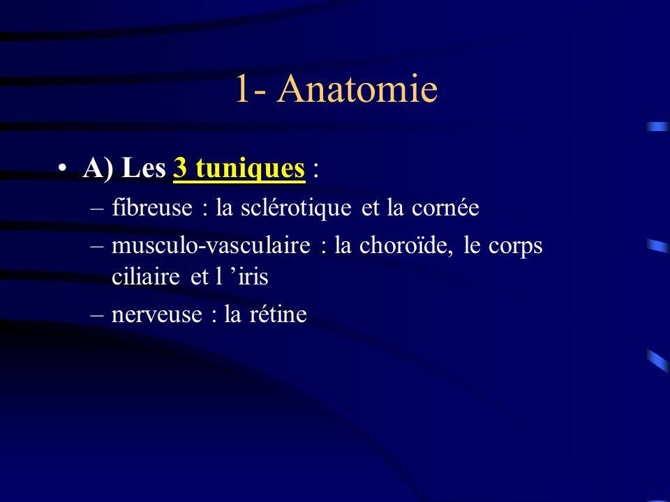 1- Anatomie A) Les 3 tuniques : –fibreuse : la sclérotique et la cornée –musculo-vasculaire : la choroïde, le corps ciliaire et l iris –nerveuse : la