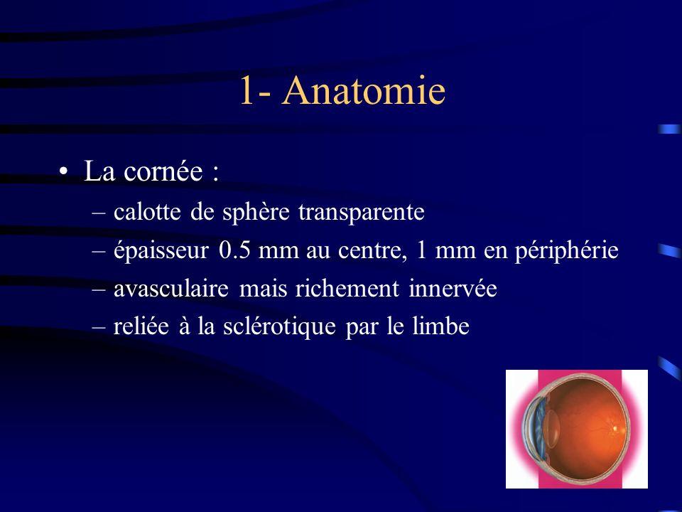 1- Anatomie La cornée : –calotte de sphère transparente –épaisseur 0.5 mm au centre, 1 mm en périphérie –avasculaire mais richement innervée –reliée à