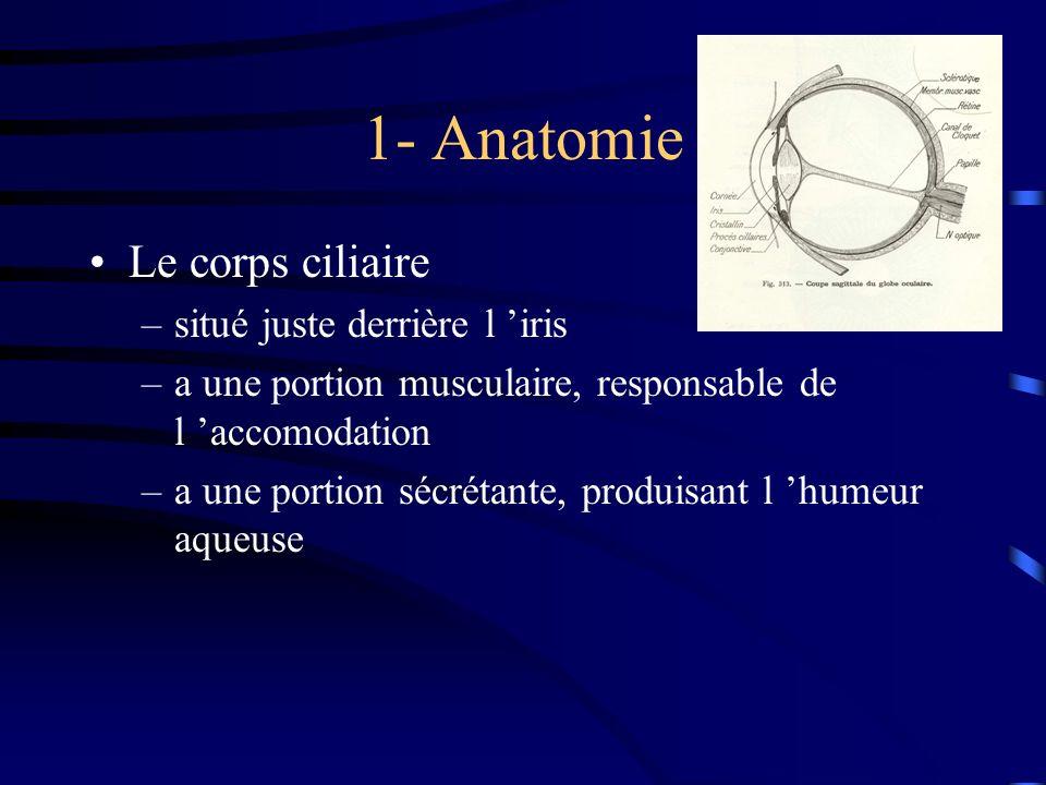 1- Anatomie Le corps ciliaire –situé juste derrière l iris –a une portion musculaire, responsable de l accomodation –a une portion sécrétante, produis
