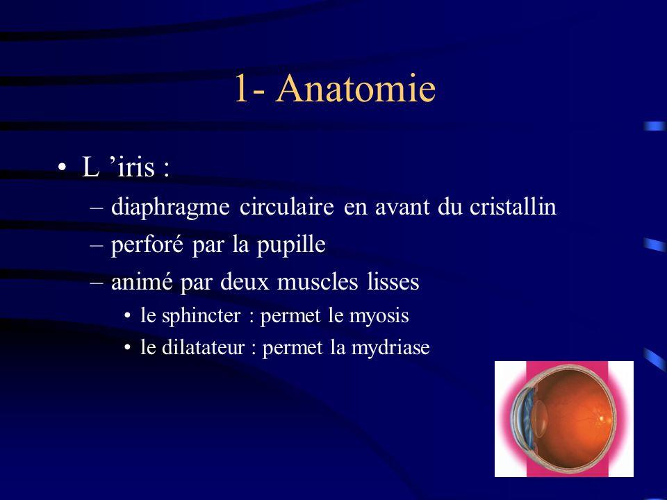 1- Anatomie L iris : –diaphragme circulaire en avant du cristallin –perforé par la pupille –animé par deux muscles lisses le sphincter : permet le myo