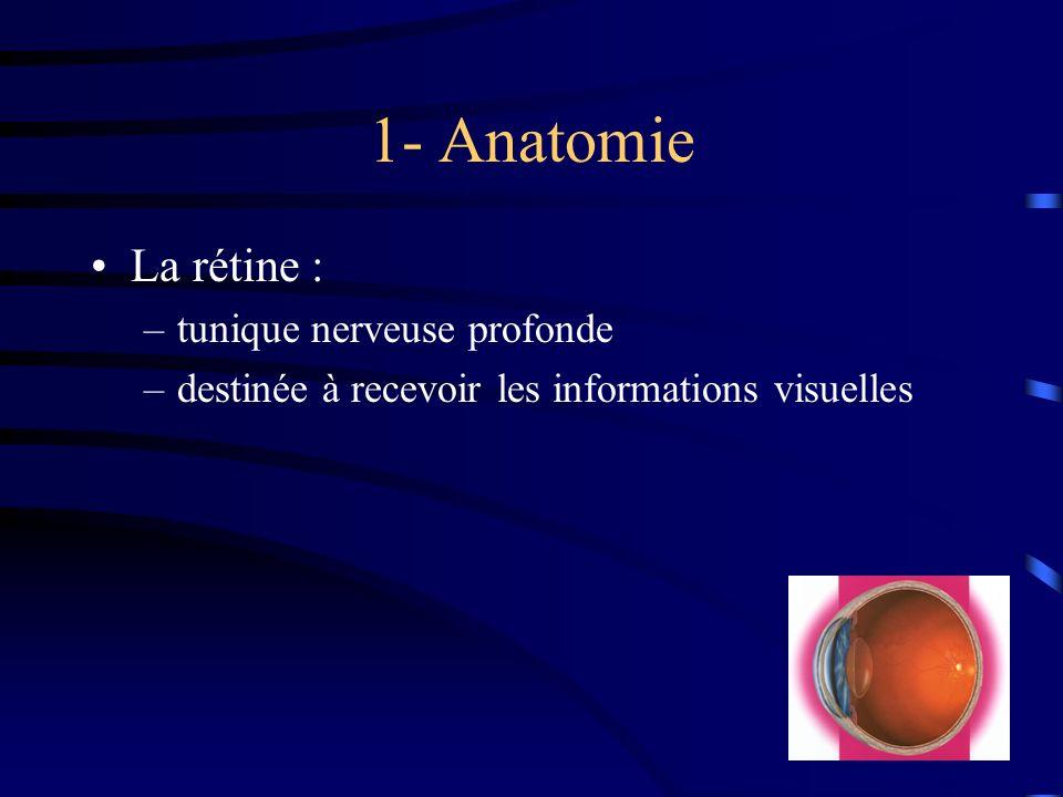 1- Anatomie La rétine : –tunique nerveuse profonde –destinée à recevoir les informations visuelles