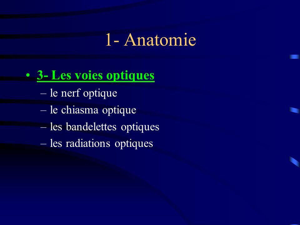 1- Anatomie 3- Les voies optiques –le nerf optique –le chiasma optique –les bandelettes optiques –les radiations optiques