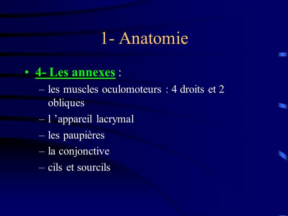 1- Anatomie 4- Les annexes : –les muscles oculomoteurs : 4 droits et 2 obliques –l appareil lacrymal –les paupières –la conjonctive –cils et sourcils