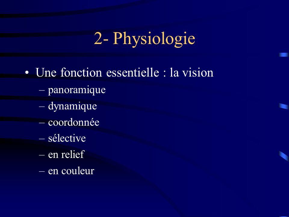 2- Physiologie Une fonction essentielle : la vision –panoramique –dynamique –coordonnée –sélective –en relief –en couleur
