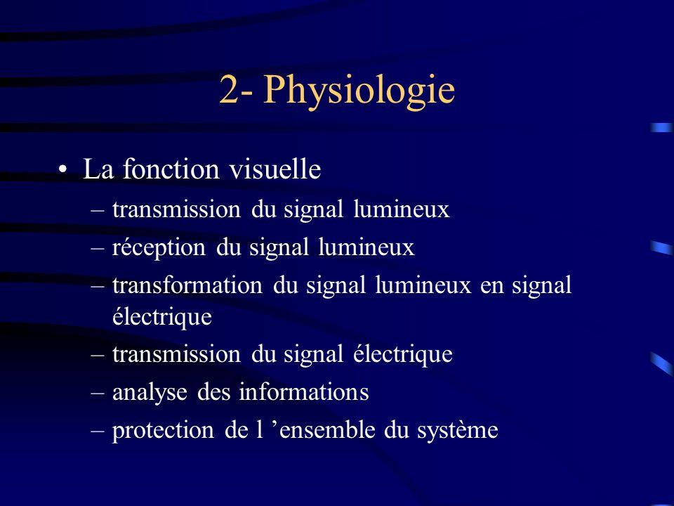 2- Physiologie La fonction visuelle –transmission du signal lumineux –réception du signal lumineux –transformation du signal lumineux en signal électr
