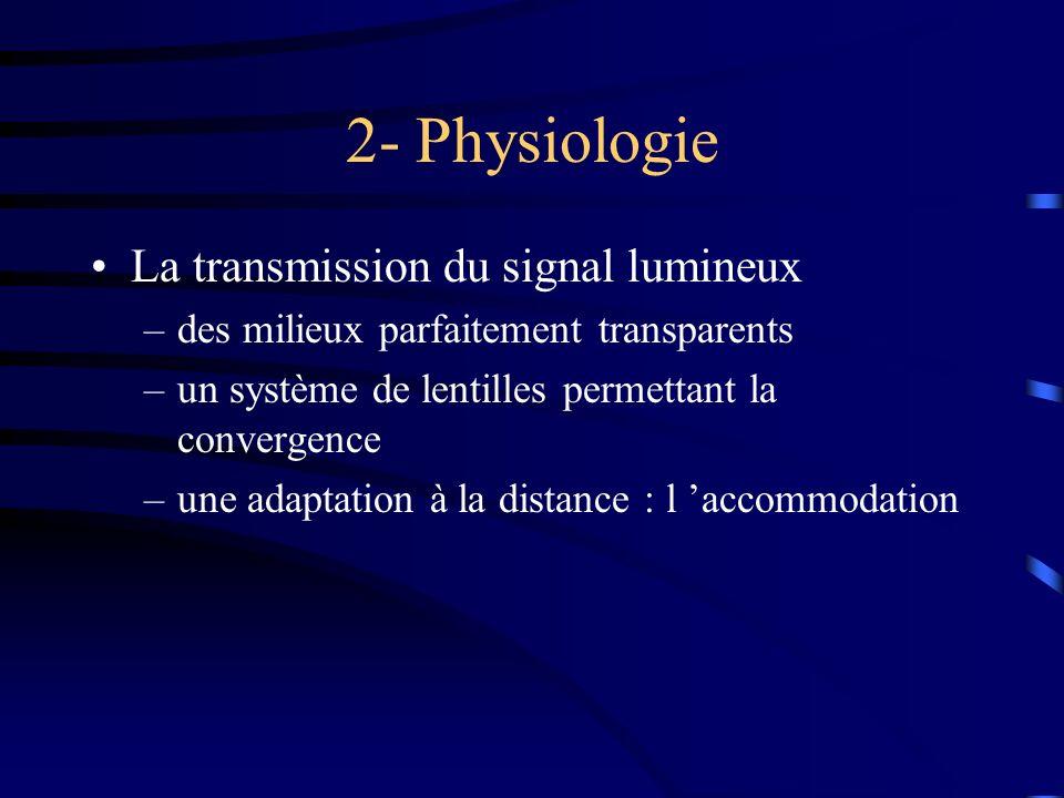 2- Physiologie La transmission du signal lumineux –des milieux parfaitement transparents –un système de lentilles permettant la convergence –une adapt