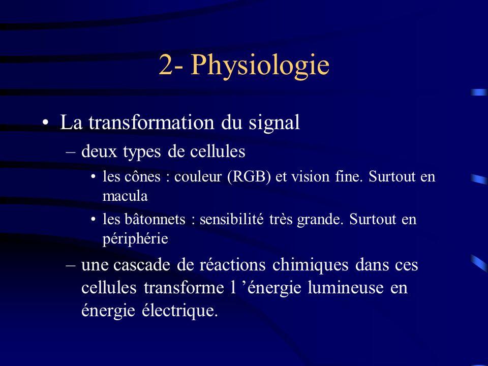 2- Physiologie La transformation du signal –deux types de cellules les cônes : couleur (RGB) et vision fine. Surtout en macula les bâtonnets : sensibi