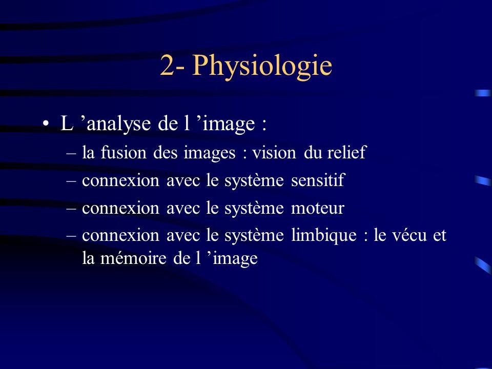 2- Physiologie L analyse de l image : –la fusion des images : vision du relief –connexion avec le système sensitif –connexion avec le système moteur –